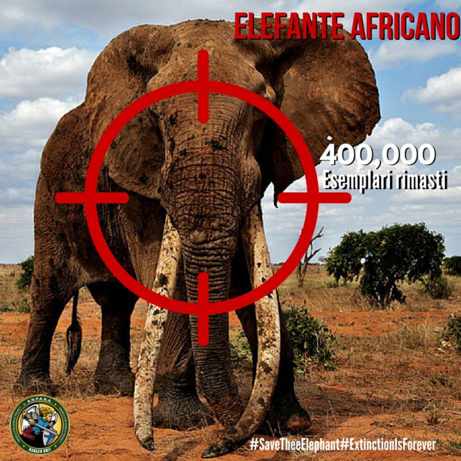 Anpana onlus official elefante africano uccisi al ritmo - Elefante foglio di colore dell elefante ...