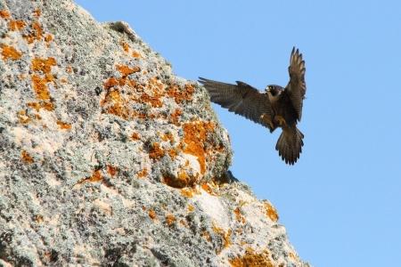 Il mondo degli animali selvatici della Sardegna nelle foto di Daniele Lorrai