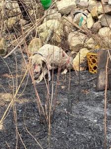 Solidarietà e vicinanza ai concittadini Sardi per la Natura e le risorse andate distrutte!