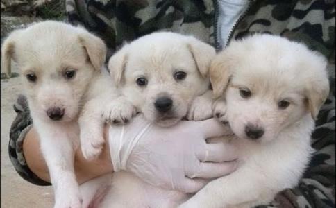 ++Silvio Berlusconi e la Pascale adottano tre cani abbandonati a Olbia++