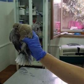 Le guardie eco-zoofile Anpana Nuoro-Ogliastra salvano una tortora in difficoltà