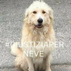 Frosinone - Cervaro - vogliamo giustizia per il cane Neve
