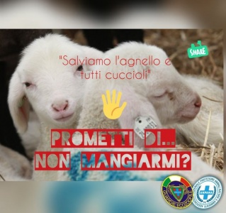 """Frosinone a Pasqua e sempre """"Salviamo l'agnello e tutti i cuccioli"""""""