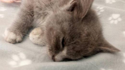 ++Guardie Ecozoofile dell' ANPANA di Rutigliano salvano un gattino da morte certa++