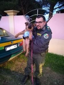Legato in mezzo agli escrementi e con poca acqua: le guardie Anpana salvano un cucciolo a Bari Sardo