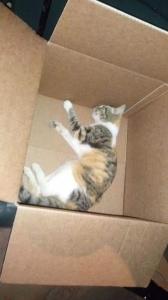 Lucera (Fg), gattina muore a seguito di lesioni, ANPANA denuncia