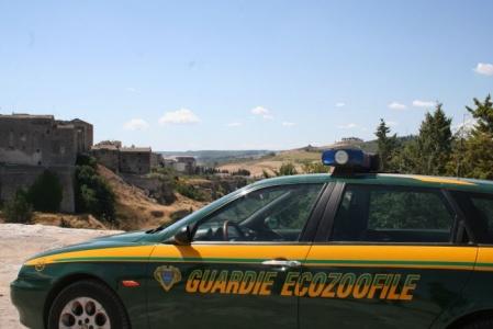 Vallo della Lucania, scoperto canile irregolare, denunciato proprietario