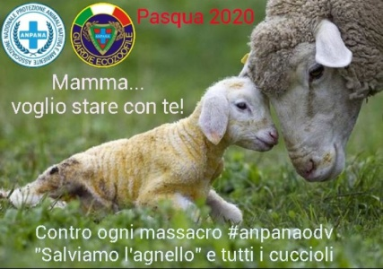 Salviamo l'agnello - pasqua 2020 non violenta