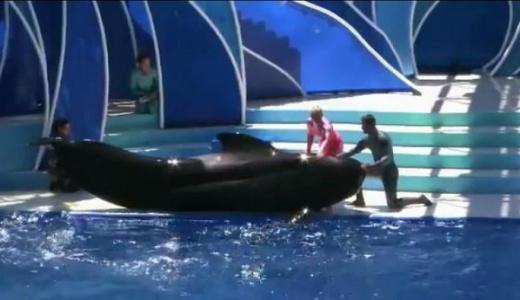 E' morta Bubbles, la balena catturata 50 anni