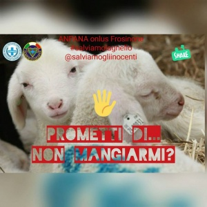 """Frosinone - ANPANA onlus """"salviamo l'agnello"""""""