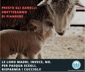#ANPANA ONLUS per una Pasqua non violenta