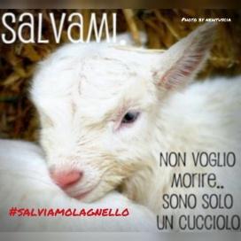 ANPANA Frosinone - #salviamolagnello
