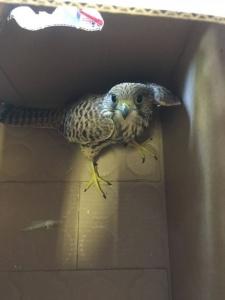 Uccelli morti, l'Anpana: «No ad allarmismi inutili»