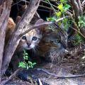 +++Cagliari, caccia al killer dei gatti: +++