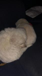 Girasole, cuccioli tratti in salvo grazie a i volontari dell'Anpana