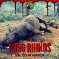 1350 rinoceronti uccisi in Africa nel 2015: la strage continua