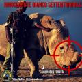 Rinoceronte Bianco Settentrionale: ne restano soltanto 3 al mondo