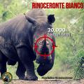 Specie a rischio: il Rinoceronte Bianco