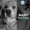 Collaborazione Anpana Frosinone-FCA per salvare mamma e 5 cuccioli