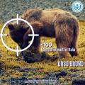 #AnimaliInPericolo: l'orso bruno rischia di scomparire dall'Italia