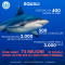 ANPANA si unisce  alla #SharkWeek