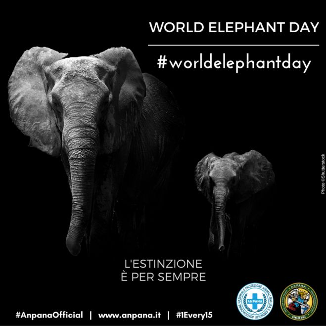 #WorldElephantDay 2016